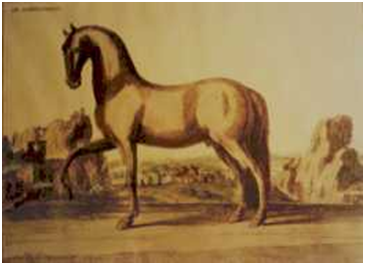 cavallo nap.PNG